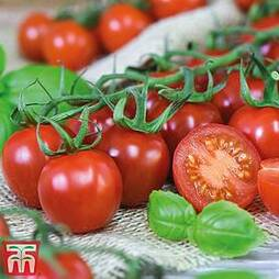 Tomato 'Rubylicious'