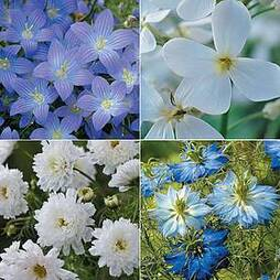 Simply Serene Flower Collection