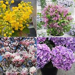 Nurserymans Choice Shrub Mix