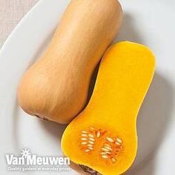 Butternut Squash 'Butterscotch'