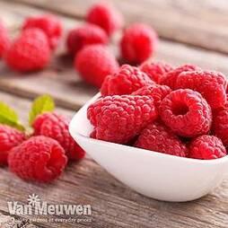 Raspberry 'Sugana'