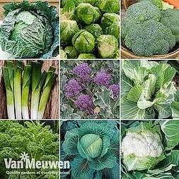 Nurseryman's Choice Vegetables