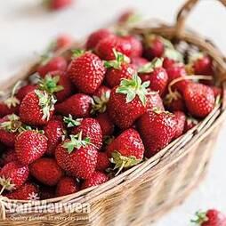 Strawberry 'Vibrant'