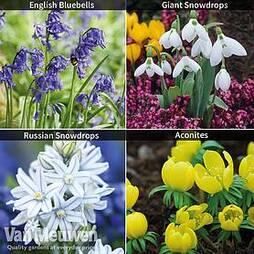 Woodland Garden Saver Collection