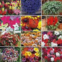 Nurseryman's Choice Summer Mix