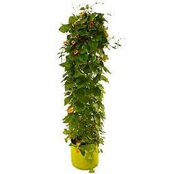 VegTrug® Patio Planter