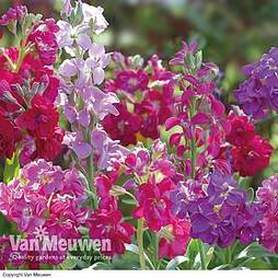 Stocks 'Most Scented Mix'