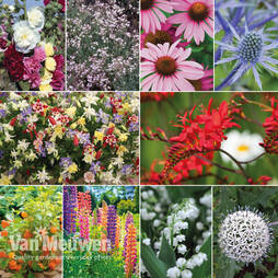 Everlasting Perennial Collection