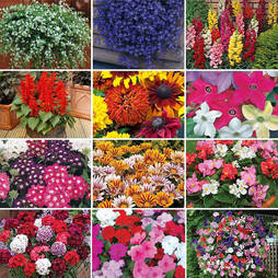 Bumper Annual Bedding Collection