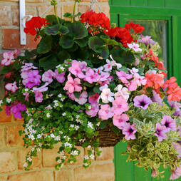 Lucky Dip Hanging Basket Collection