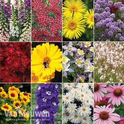 Nurserymans Choice Perennial Mix