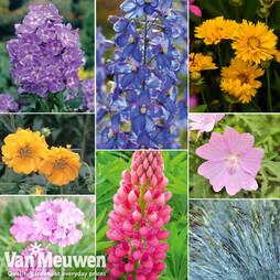 Summer Garden Perennial Collection