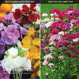Garden Ready Scented Duo Collection