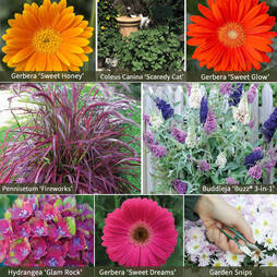 Shades of Summer Garden Pack