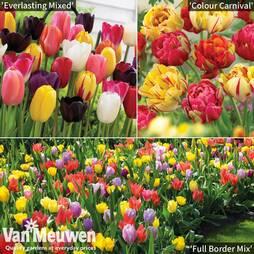 Tulip Bumper Bulb Collection