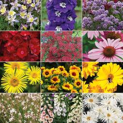 72 Perennial Collection